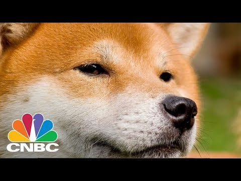 Dogecoin Was Created As A Parody, Now It's Worth More Than $1 Billion | CNBC