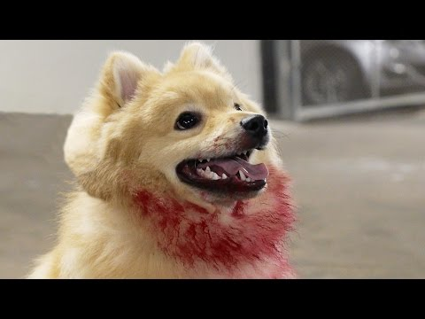 Cute Killer Doge Scare Prank