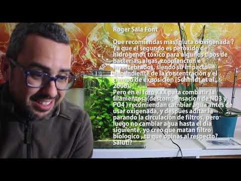 Vídeo respuesta 2: JBL Manado, ADA, agua oxigenada…