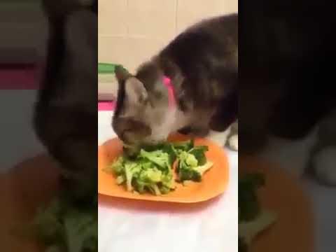 Ada Tak Kucing Korang Suka Makan Makanan Macam Ni