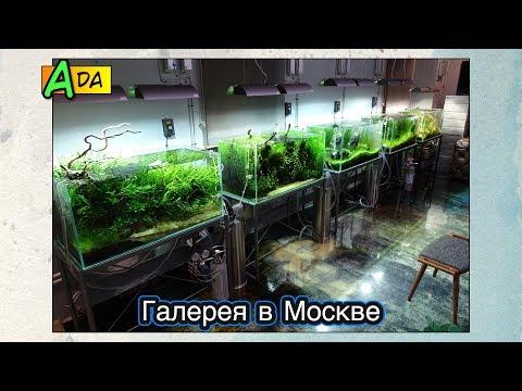 Галерея ADA в Москве ● Природный аквариум