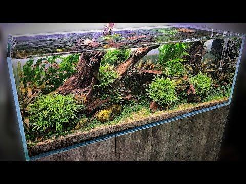 The BEST AQUASCAPES at Aquarium Gardens + WIN A NEO DIFFUSER