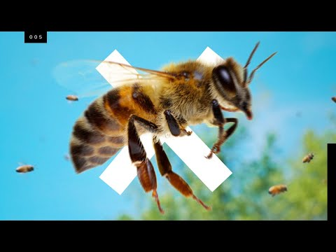 Bees are going extinct…but not the ones you think