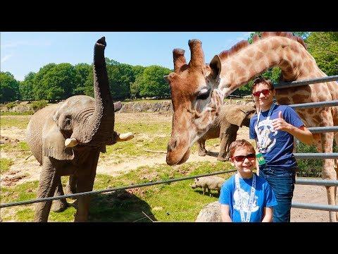 VLOG – ON NOURRIT LES ÉLÉPHANTS ET LES GIRAFES ! – ZooSafari de Thoiry