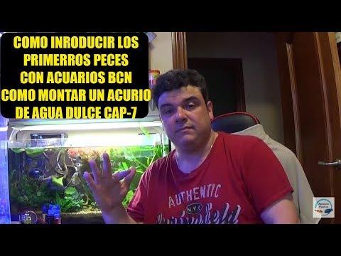 INTRODUCCION DE LOS PRIMEROS PECES CON ACUARIOS BCN, COMO MONTAR UN ACUARIO DE AGUA DULCE CAP-7