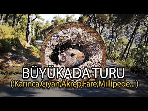 Büyükada Turu / Ekipçe Ada incelemesi!