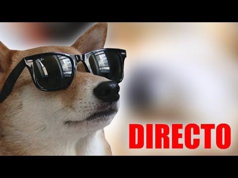 ¡Doge responde! (DIRECTO)