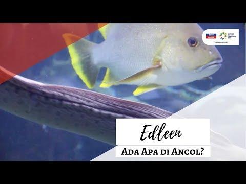 Sukan Asia 2018: Ada Apa Di ANCOL| Edleen | Astro Arena