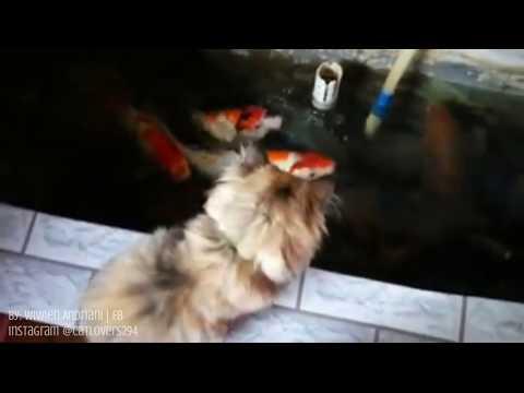 Namannya brownie, tugasnya jaga ikan biar gak ada yang ambil 😂 – Cat Lovers