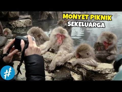 Cuma Di JEPANG, Ada Monyet Berendam Air Panas