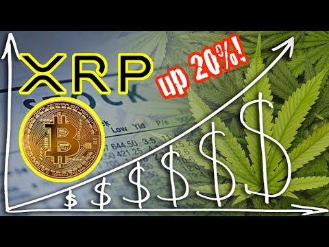 Ripple XRP up 20%! Marijuana stocks go crazy. Bitcoin price analysis