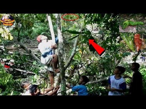 Warga HEBOH Melihat Ada Hal Aneh & TakBiasa di Pohon ini, Saat Dilihat Ternyata itu…. Mengejutkan!