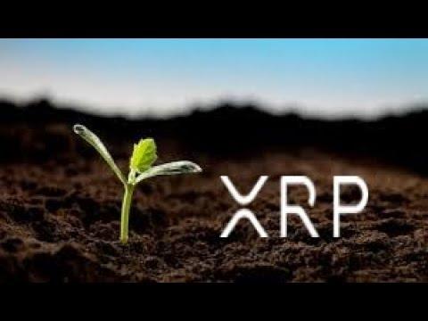 CRYPTO XRP : LES FAITS MARQUANTS DU SWELL / X RAPID ET LE FUTUR