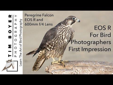 First Impressions EOS R Bird Photographers