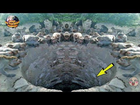 Banyak Monyet MeLihat Ke Bawah sumur Bikin Orang² Curiga! TakDisangka Dalamnya Ada…