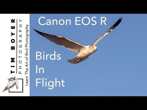 Canon EOS R For Birds In Flight Photography