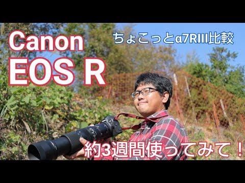 Canon EOS R 約3週間使った感想とまとめ。ちょっとだけα7RIII比較
