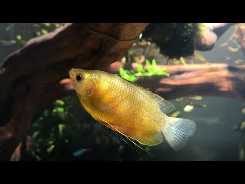 ADA 75P New Fish!