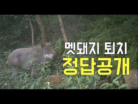 [한국농수산TV] IoT를 활용한 멧돼지퇴치 작전 in 경기도 광주시 남한산성면