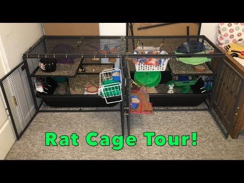 Horizontal DCN Rat Cage Tour