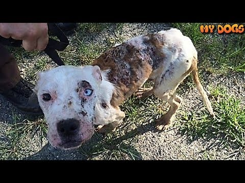 Rescue an Abandoned Dog Who Was Found On The Verge of Death