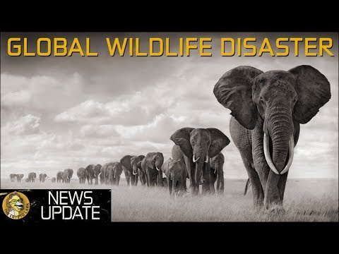 The Hottest New Phone, Global Wildlife Disaster, & Tron Smashing Ethereum – Crypto & Bitcoin News