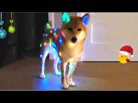 Deck the Doge