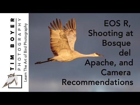 EOS R, Bosque & Camera Recommendations