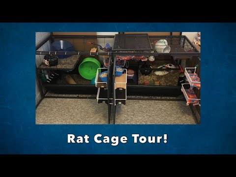 DCN Rat Cage Tour!