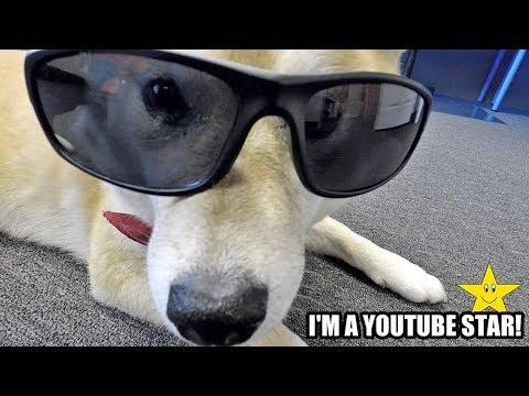 Licking The Famous Internet DOGE DOG MEME IRL!!!