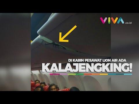 Horor! Ada Kalajengking Berkeliaran di Kabin Pesawat Lion Air!
