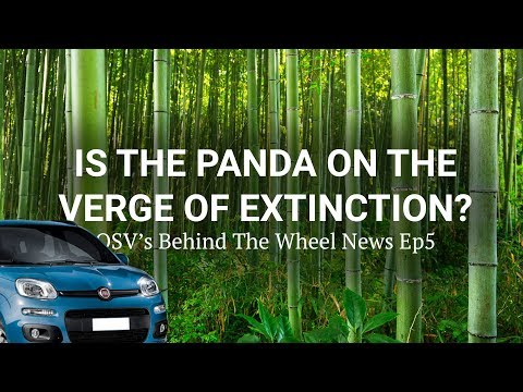 Is the Panda on the Verge of Extinction? | OSV Behind the Wheel