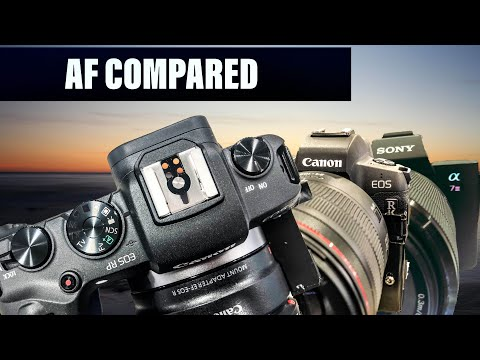 AF TEST | canon eos R vs canon eos RP vs Sony a7 iii