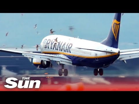 Massive twin-engine bird strike | Ryanair 737, BCN