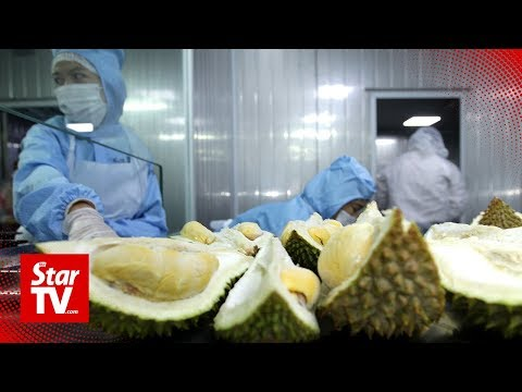 M'sia hopes to export frozen whole durian to China by year-end