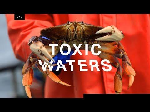 Who's to blame for the neurotoxin poisoning the Pacific?