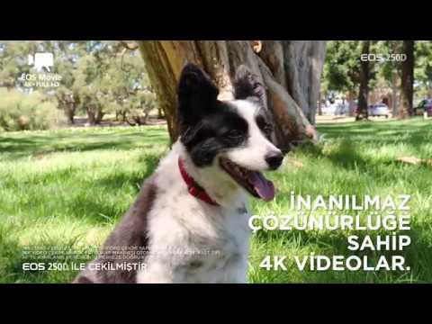 Canon EOS 250D ile tanışın!