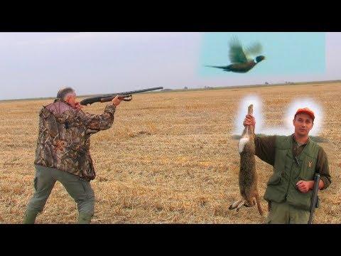 Hunting Serbia – Vojvodina – Pheasant & Hare Hunt | Lov u Vojvodini – fazan, zec | Caccia al fagiano