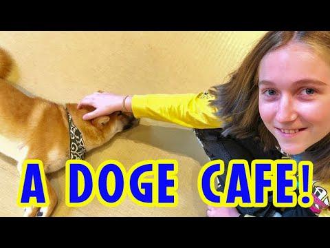 Doge Cafe Shiba Inu Dog Cafe