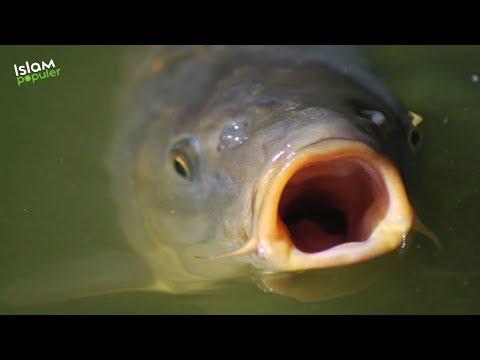 Dibalik ALLAH Mencabut Lidah Ikan, Ada Hikmah Untuk Kita Semua
