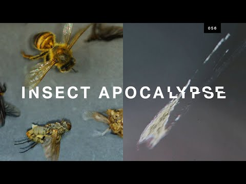 """Is the """"insect apocalypse"""" real?"""