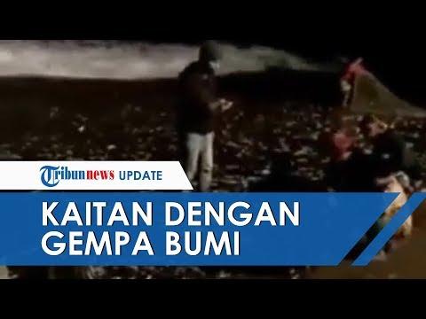 Viral Ikan ikan Terdampar di Pantai Canggu Bali, Dikabarkan Ada Kaitan dengan Gempa Bumi