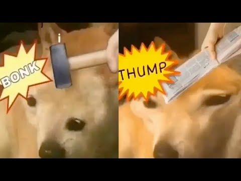 Doge BONK vs THUMP! (Doge Meme)