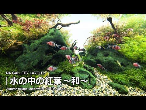 [ADAview] 水の中の紅葉~和~ Autumn foliage underwater -Fall in Japan-