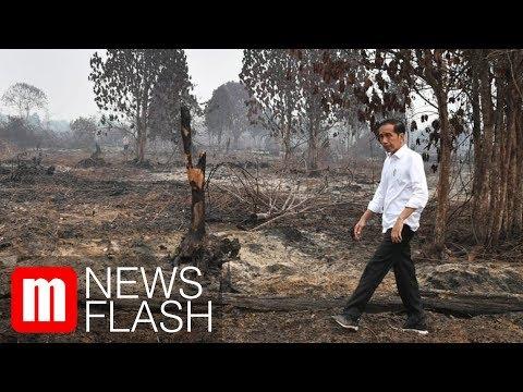 Jokowi Ungkap Kebakaran Hutan di Riau Ada Unsur Kesengajaan