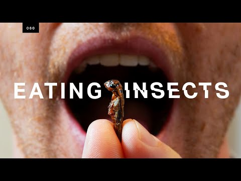 Taste-testing crickets from a high-tech insect farm