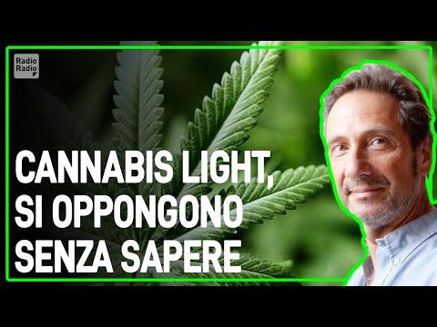 SI OPPONGONO ALLA CANNABIS LIGHT IGNORANDO COSA SIA VERAMENTE – Mario Tozzi