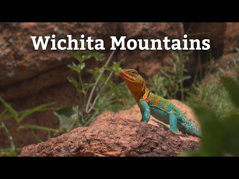 Canon EOS-M Raw Video – Windy Day in the Wichita Mountains – Collared Lizard, Crayfish, Bison
