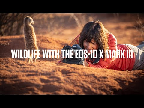 Photographing rare wildlife with the Canon EOS-1 D X Mark III