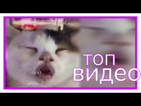 КОТ, НЕ БОЛЕЙ! || Видеофид